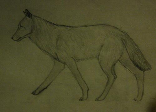 волки (1).jpg