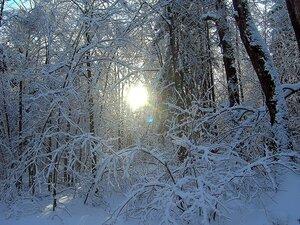 Луч зимнего солнца