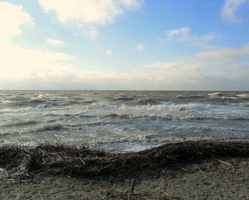 У моря ... SAM_5735.JPG