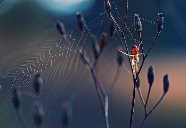 Winners Society of Biology's 2014 Photography Competition0.jpg