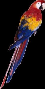 попугай.png