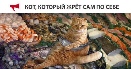 кот котрый жрет.jpg