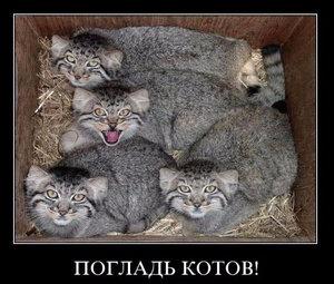https://img-fotki.yandex.ru/get/17870/194408087.12/0_10140c_1790a86_M.jpg