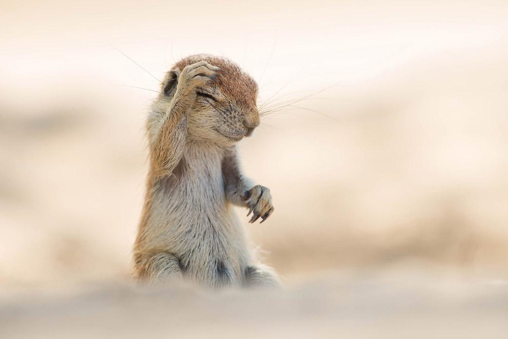 8. Широко шагая. (Фото Eric Gessmann | Comedy Wildlife Photography Awards):
