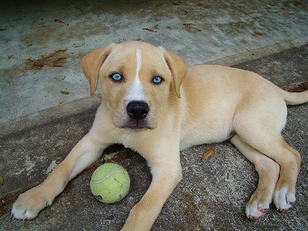 помесь собак разных пород
