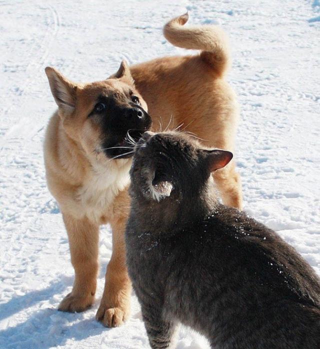 Неразлучные друзья Булька и Платон