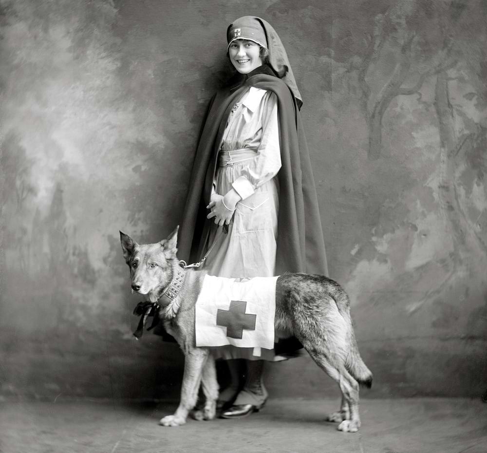 Военная медсестра и ее верный пес (1917 год)