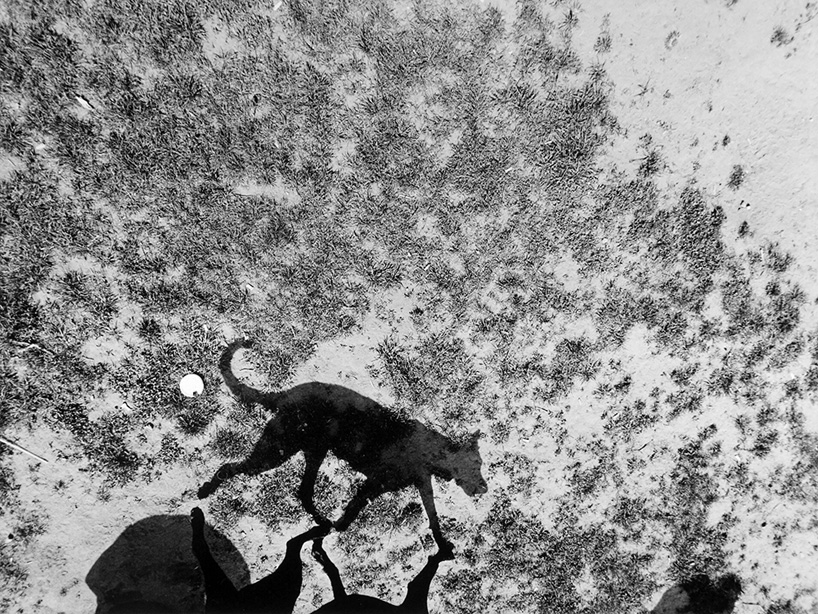 Mondo cane, Thomas Roma0.jpg