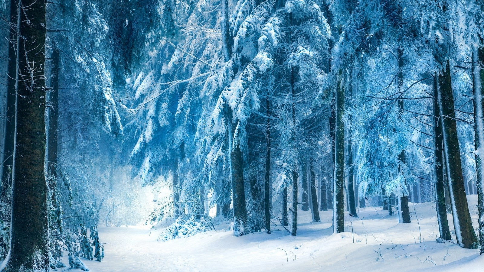 les-zima-sneg-derevya-6619.jpg