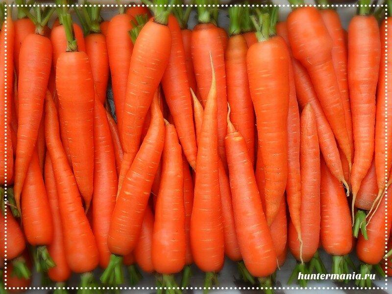 Морковь и ее секреты