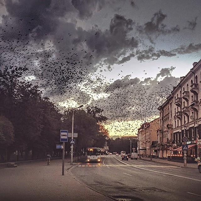Фотограф из Пскова получил премию за лучшие фото в Instagram 0 1445f1 9b949e7e orig