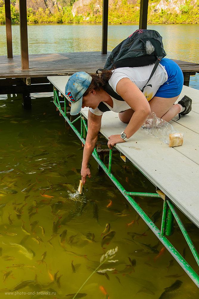 Фото 11. Традиционная для Таиланда забава - кормление рыб. Каньон Ранонг. Поездка на машине двух туристов из России (320, 38, 8.0, 1/50)