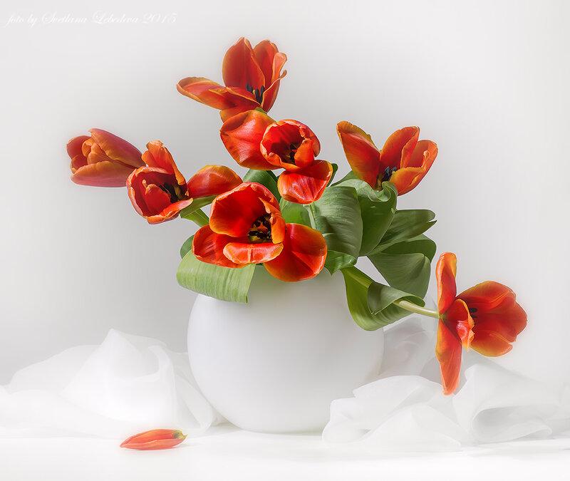 С красными тюльпанами