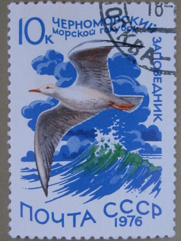 Морской голубок (Larus genei). Черноморский заповедник (Украинская ССР).