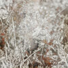 sd_woodland-winter-p8.jpg