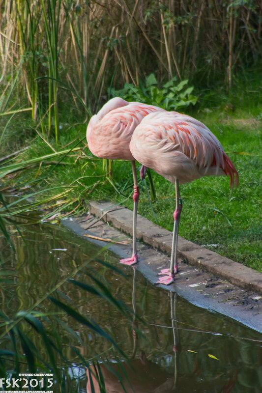 warshaw_zoo-128.jpg