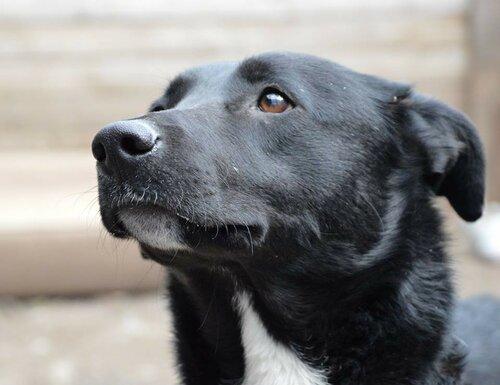 Дэйзи собака из приюта москва