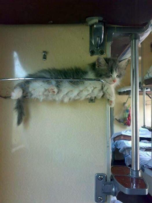 Полка для котенка. 13.