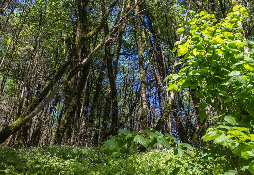 7. Всего в Тисо-самшитовой роще произрастает более 200 видов растений из 60 семейств. Прежде вс