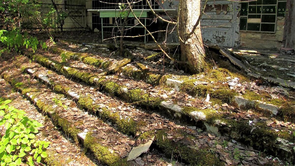 2. Тополя поднимают тротуарные плиты, ломают бетон и становятся домом для птиц.