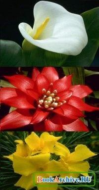 Книга Схемы вышивки крестом «Цветы»