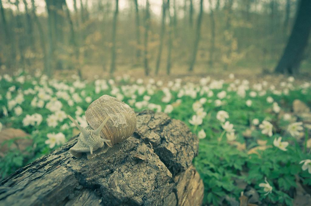 """4. Лесной """"олень"""". Учимся фотографировать макро с фотоаппаратом Nikon D5100 KIT 18-55"""