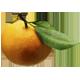 Гадание на мандаринах