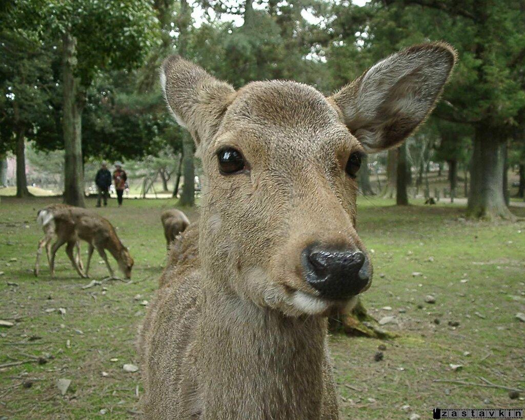 deer01.jpg