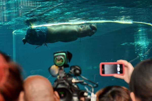 Ник Вуйичич поплавал в воде со смертельными акулами 0 12da8d 9be66cd orig