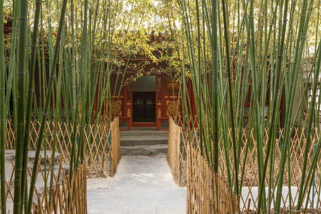 Бамбуки и павильон