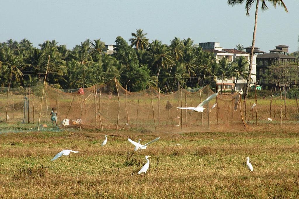 Фото 1. Отдых на Гоа. Отзывы туристов