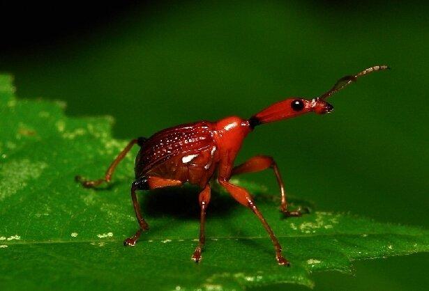 природа макро насекомое жук бесплатно