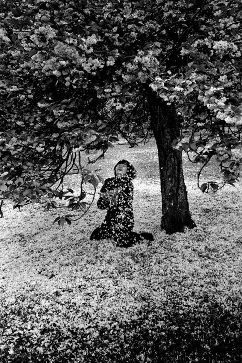 1983. Парк-де-Со, японские вишни