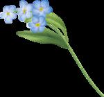 цветы-(257).png