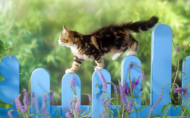кошка не пускает в дом другую кошку