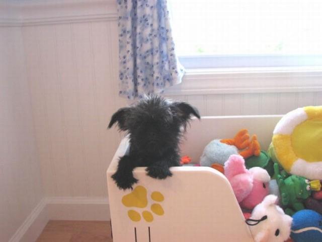Америка. Собачья конура класса Люкс (29 фото)