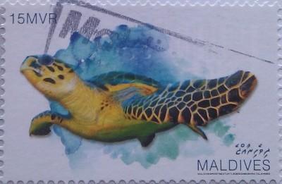 мальдивы черепаха 15