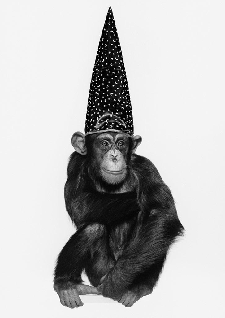 работа фотографа Альберта Уотсона / Monkey with Hat, New York, 1992 - photo by Albert Watson