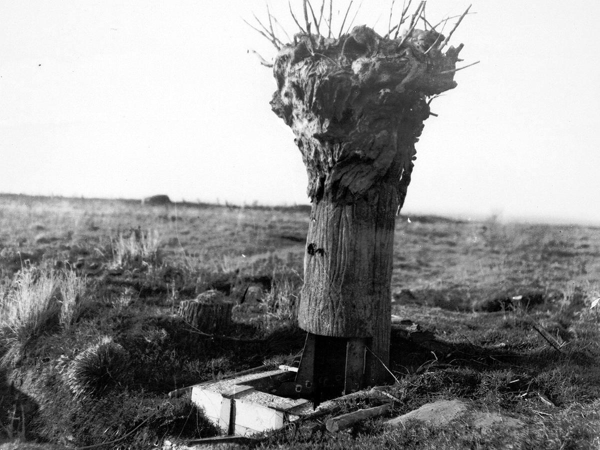 Британский наблюдательный пункт, замаскированный под пенек от дерева (12)