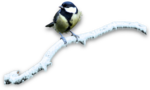 mzimm_snow_wonder_bird_on_branch_snow_sh.png
