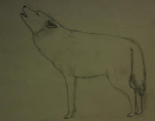 волки (2).jpg