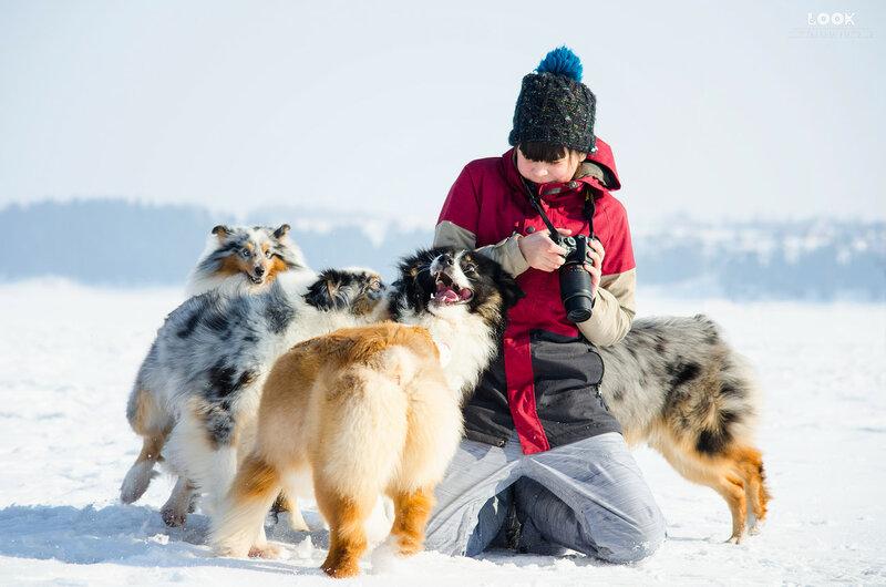 Мои собаки: Зена и Шива и их друзья весты - Страница 8 0_a83d4_2b94ab5f_XL