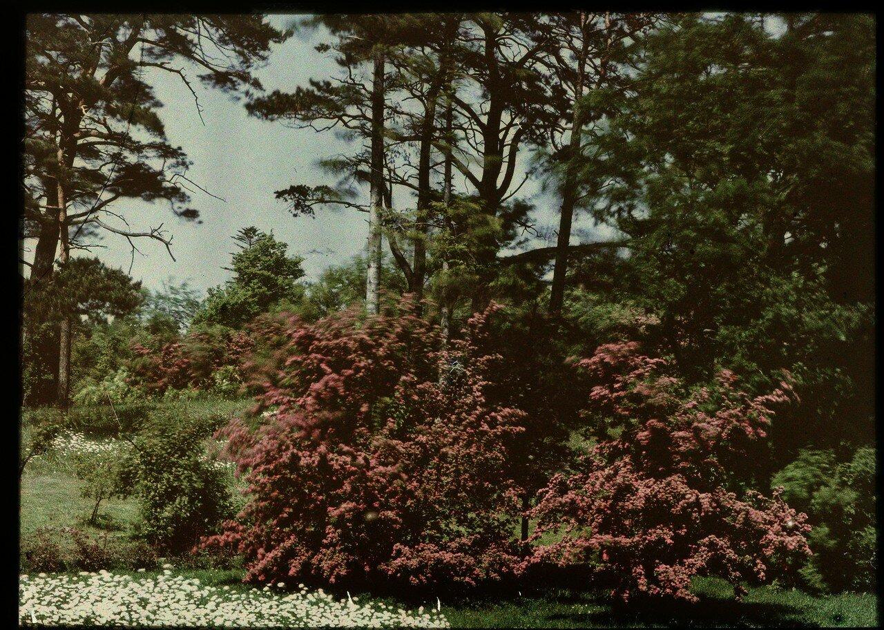 1907. Парк