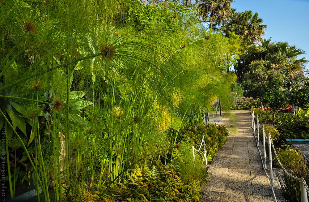 Madeira-Garten-(18).jpg