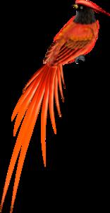 птички оранжевые