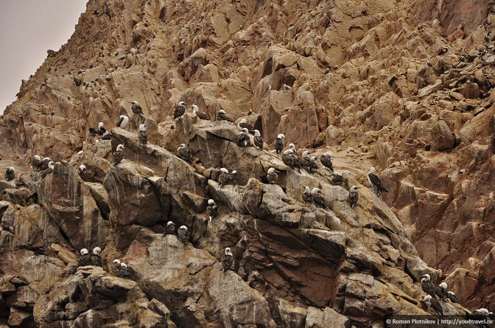 0 16174a a4b2314b orig Национальный парк Паракас и острова Бальестас в Перу