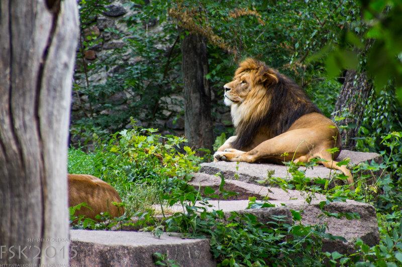 kyiv_zoo-104.jpg