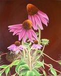 1494458427127-Echinacea-copy.jpeg