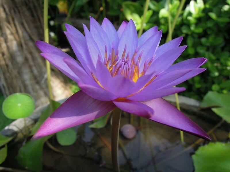 Индонезия, о. Бали, Санур. Экзотические растения