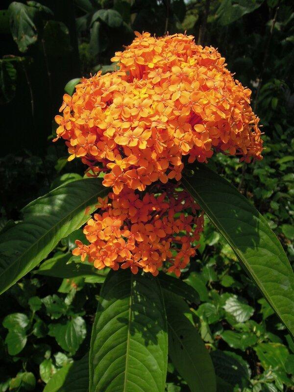 Сингапур, Ботанические сады